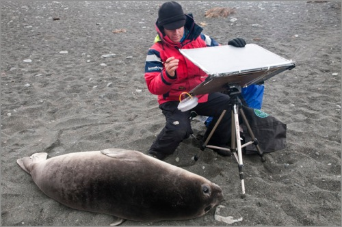 """Painting with Elephant Seal pup at Gold Harbour"""