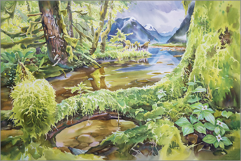 The great bear rainforest 24in x 36in watercolour