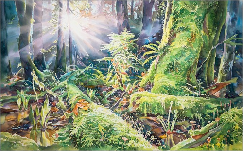 """Spring in the Pacific Spirit Forest"""